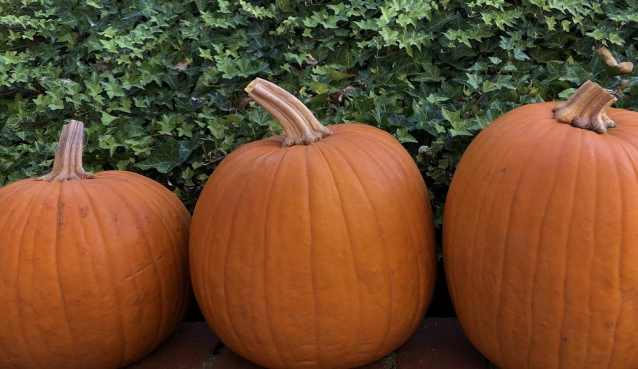 Pumpkins are lined up, ready to be carved or painted in the spirit of Halloween. Photo by Elias Robles